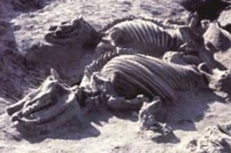 Il pericolo eruzione dello yellowstone mondo di misteri for Cenere vulcanica